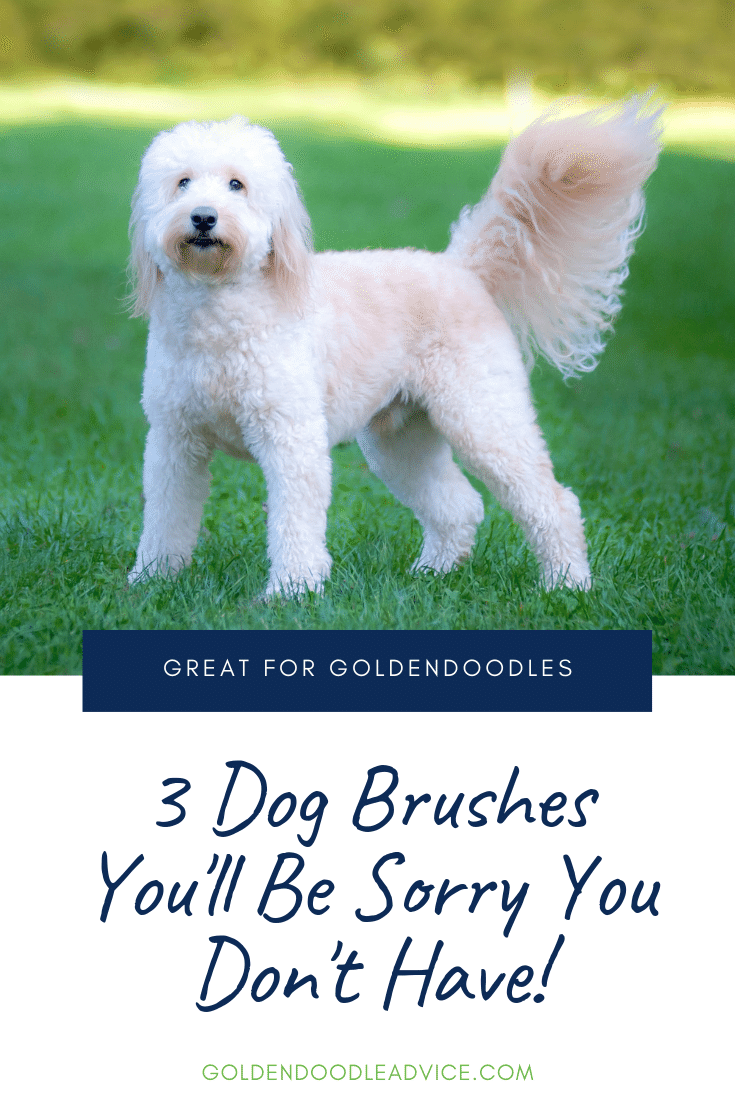 3 Dog Brushes You'll Be Sorry You Don't Own!