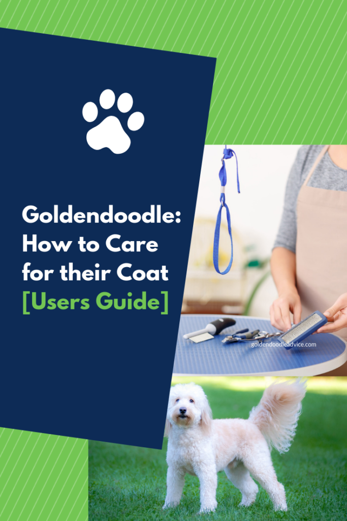 How to Care for a Goldendoodle Coat: Grooming, Brushing and Costs [Users Guide]