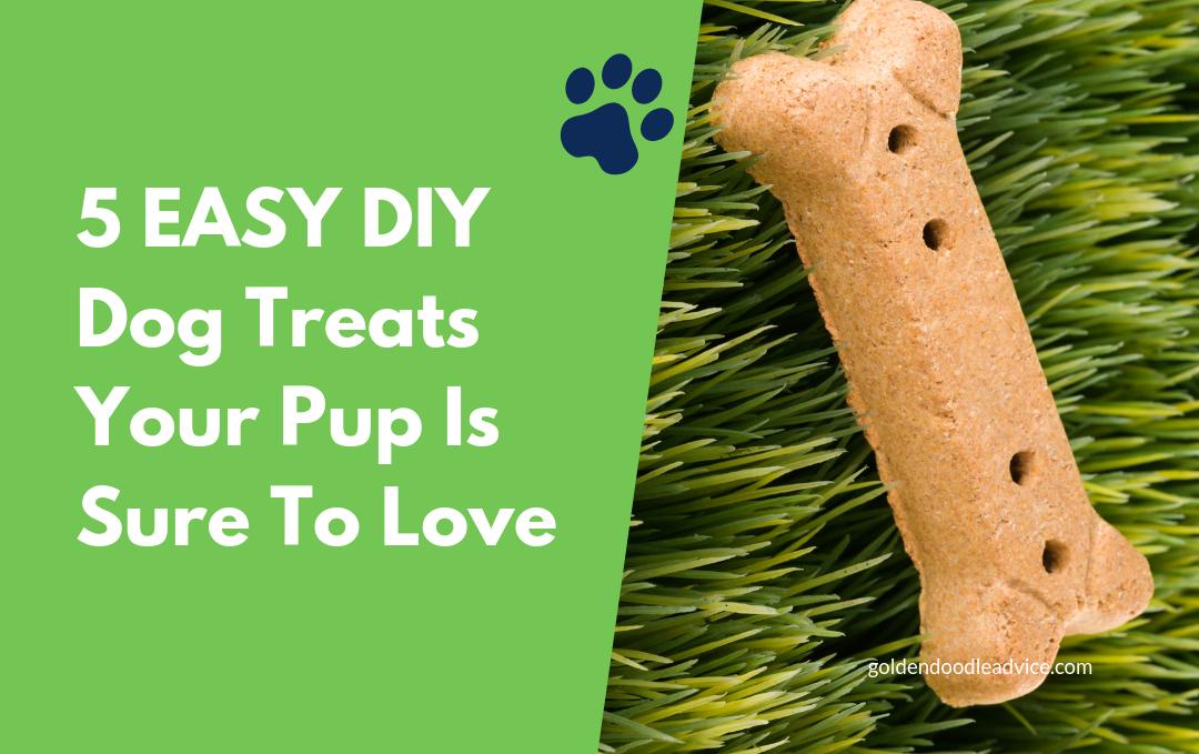 5 Easy DIY Dog Treats