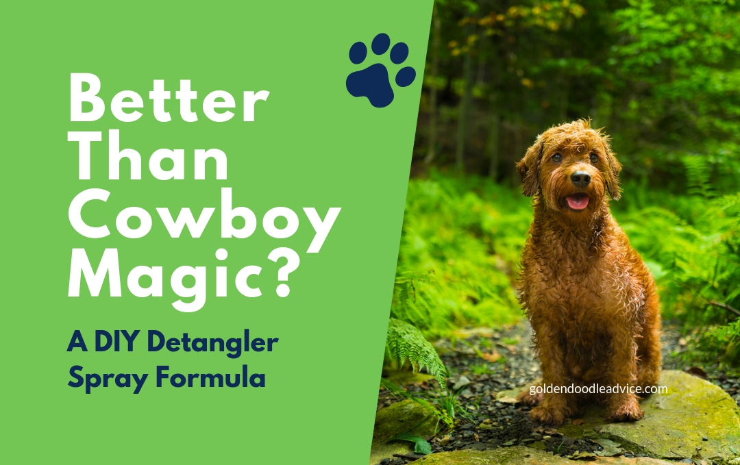 Better than Cowboy Magic? This DIY Detangler Spray is AMAZING! DIY Detangler spray formula for dogs goldendoodles cowboy magic