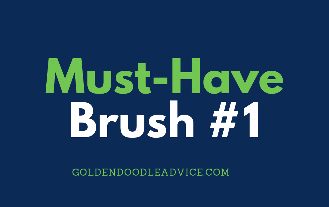 Goldendoodle Must have Brush #1