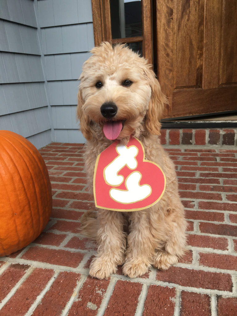 Goldendoodle Beanie Boo Halloween