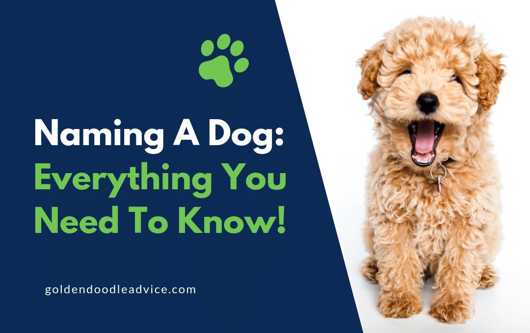Naming a Dog