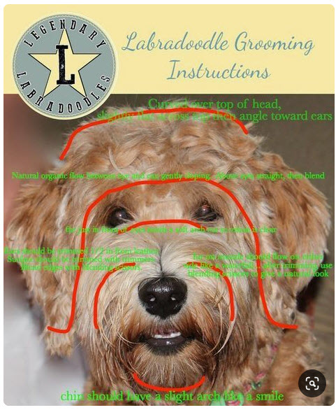 Goldendoodle grooming and haircuts