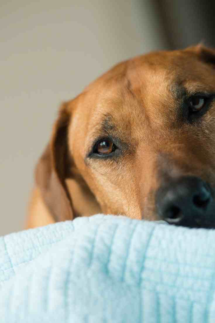 How Long Does It Take For A Dog To Forget A Person?