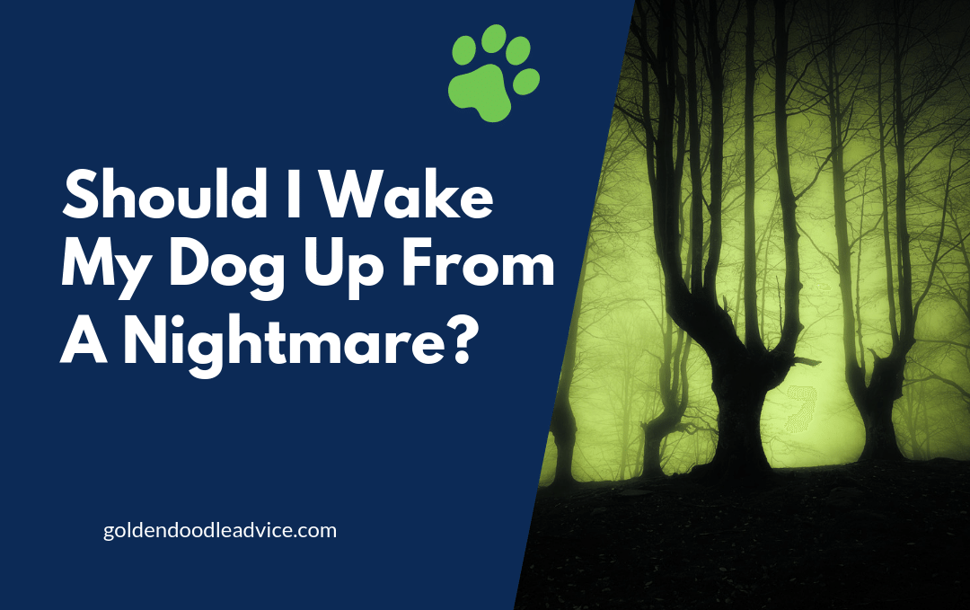 Should I Wake My Dog Up From A Nightmare?