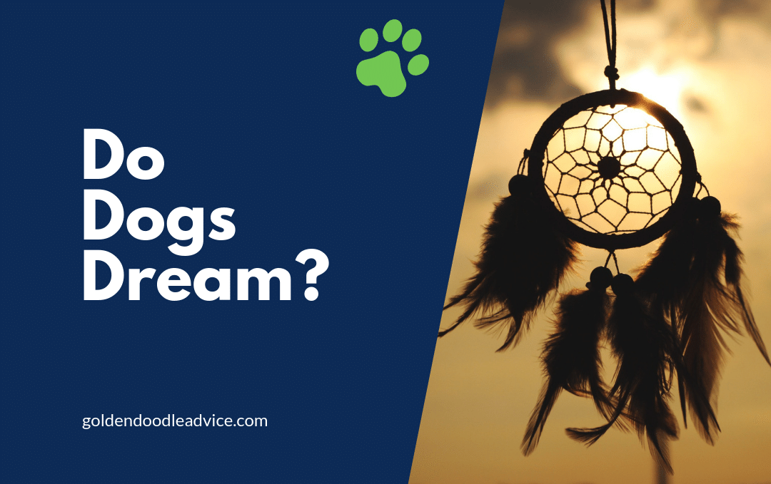 do dogs dream like humans and have nightmares