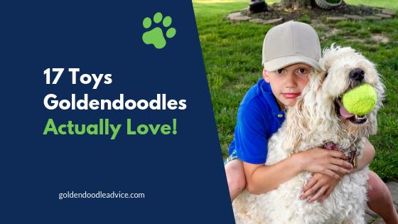 17 Toys Goldendoodles Actually Love!