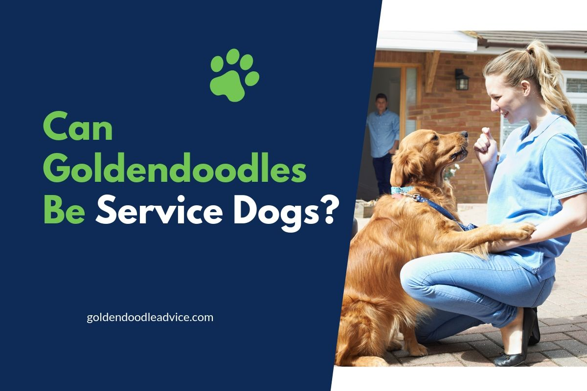 Can Goldendoodles Be Service Dogs?