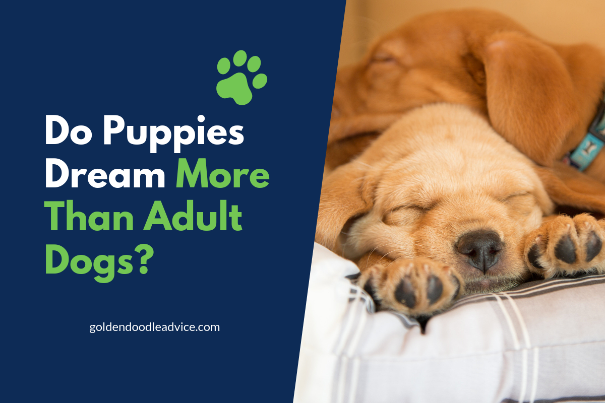 Do Puppies Dream More Than Adult Dogs?