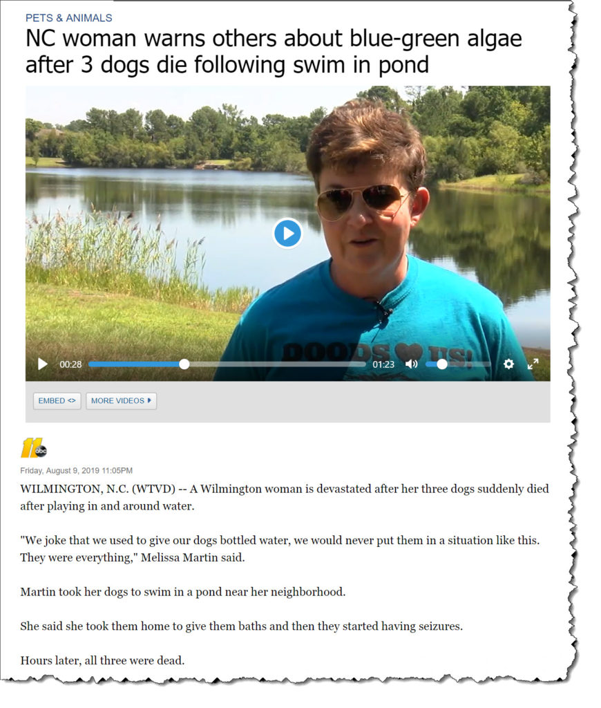Don't Take Your Dog Swimming Until You Read This Warning!