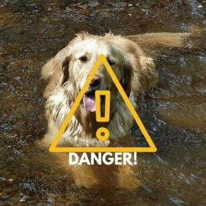 warning for dogs swimming in lakes