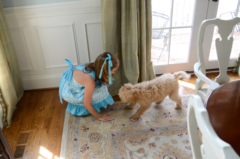training a goldendoodle