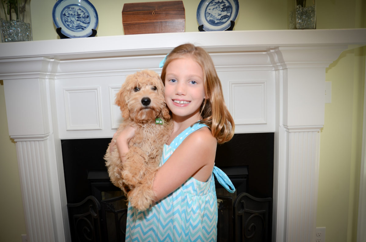 Lexie, mini Goldendoodle puppy, being held
