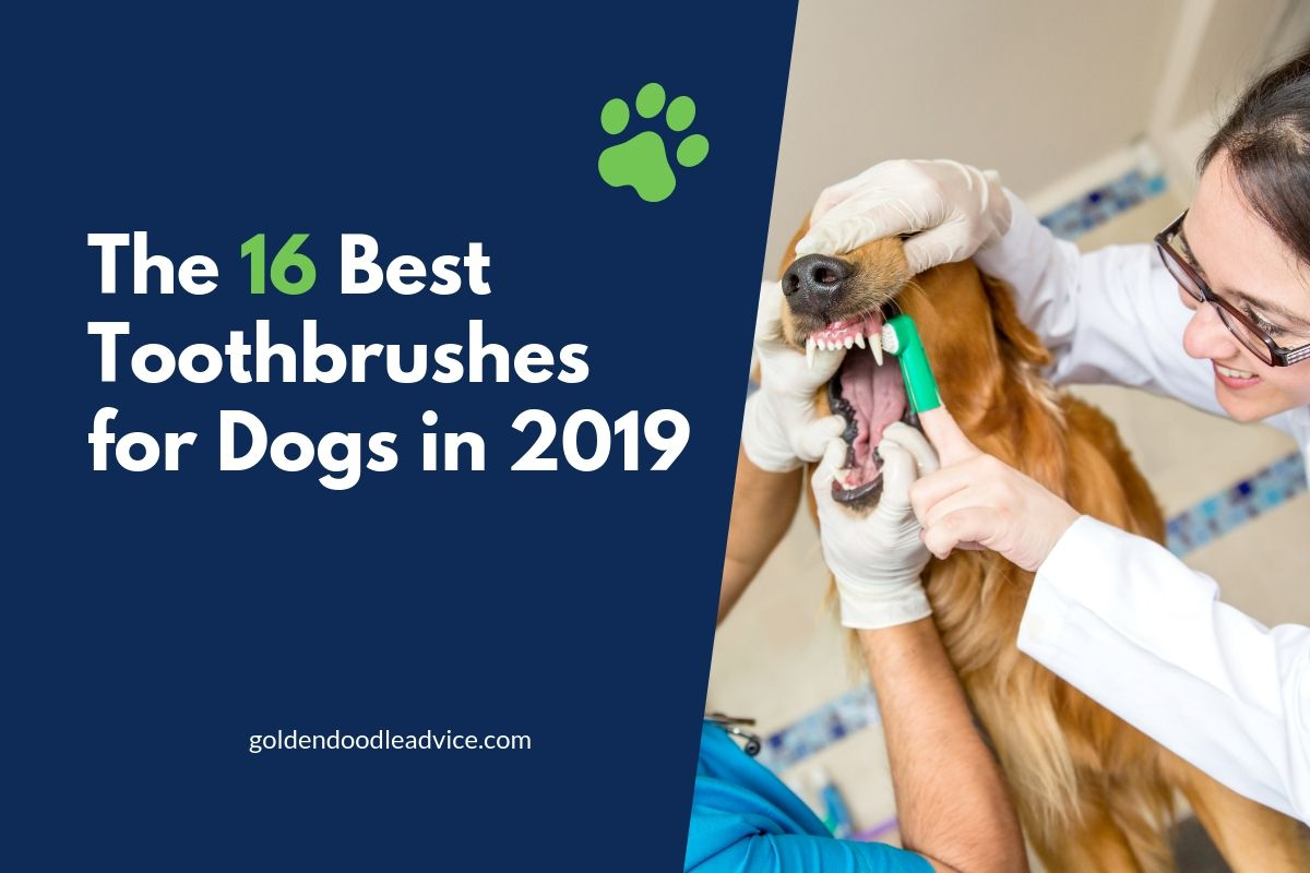 The 16 Best Toothbrushes for Dogs in 2019
