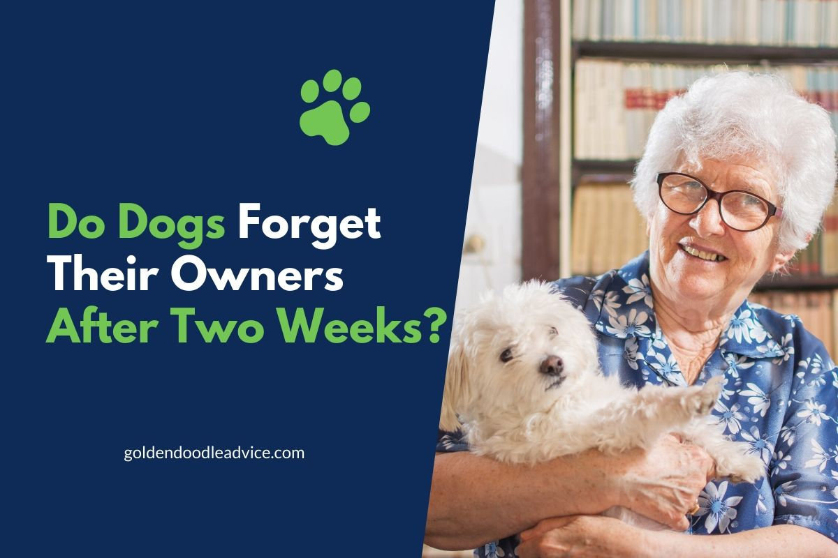 Do Dogs Forget Their Owners After Two Weeks?
