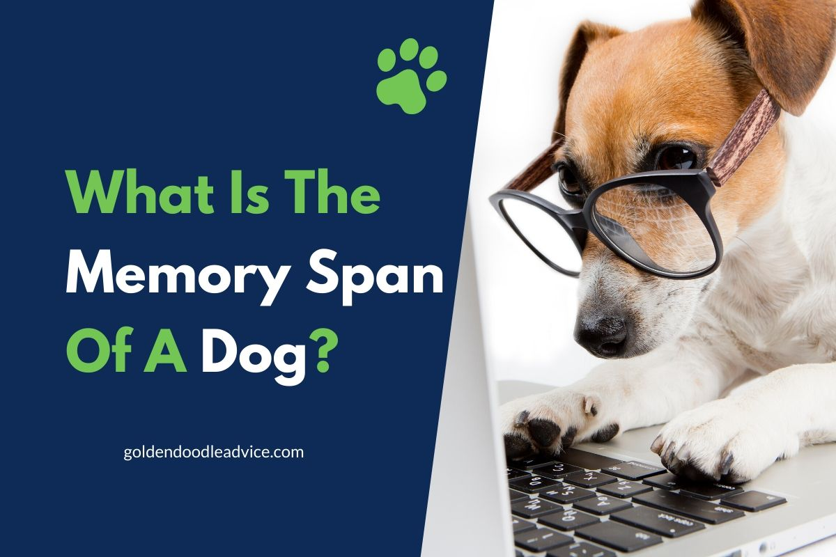What Is The Memory Span Of A Dog?