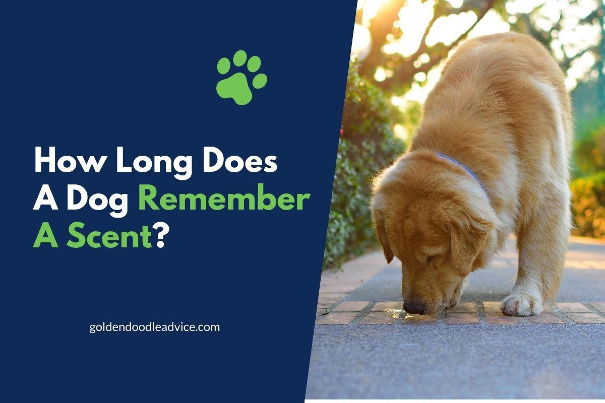 how long does a dog remember a scent?