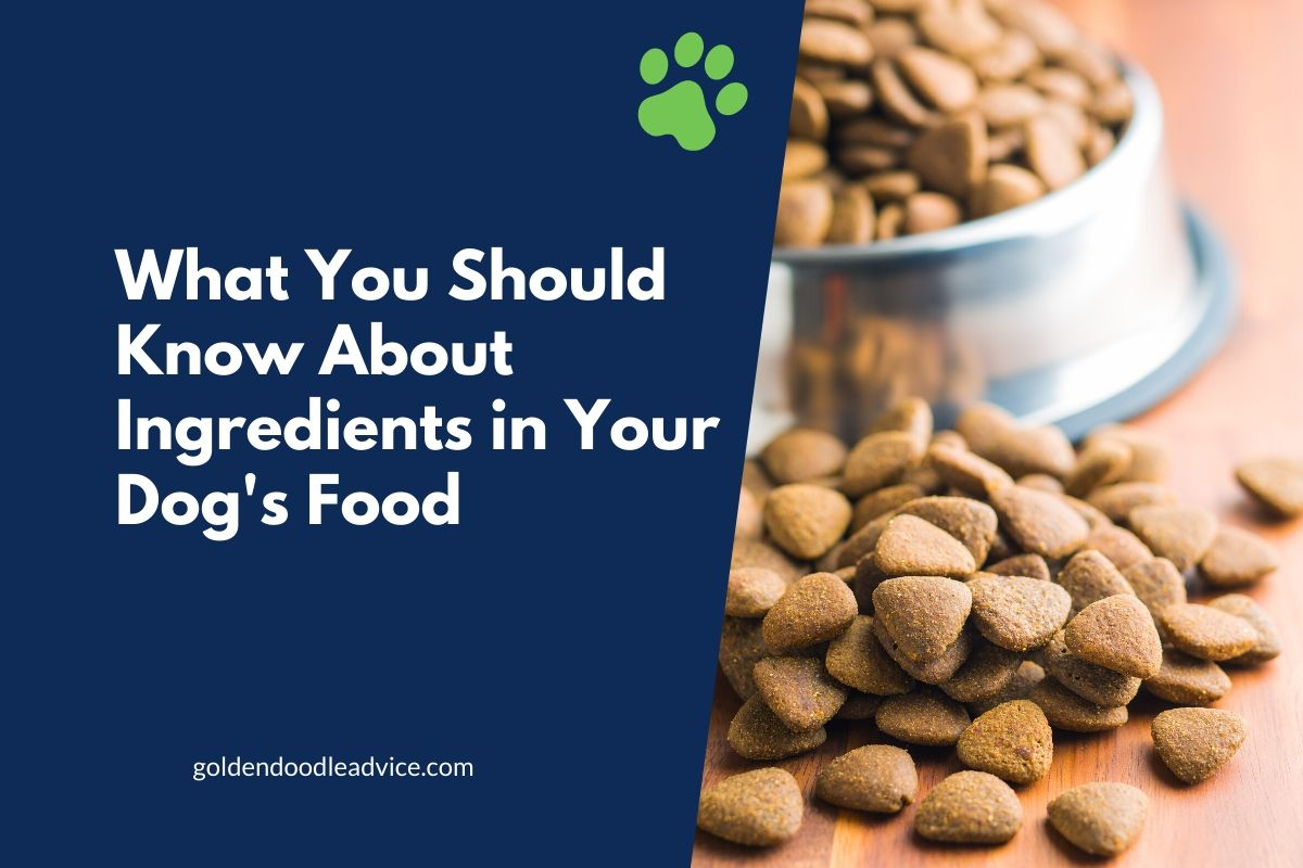 What You Should Know About Ingredients in Your Dogs Food