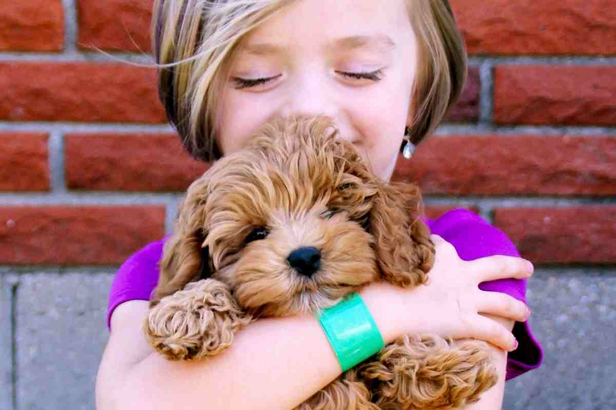 How To Take Care Of A Goldendoodle Puppy 15 Veterinarian Tips Goldendoodle Advice