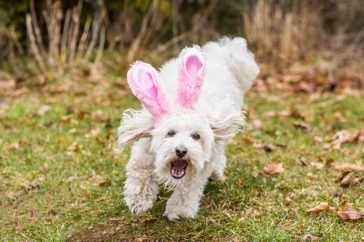 Are Goldendoodles Good with Rabbits?