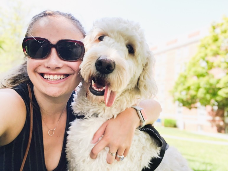 When Should a Goldendoodle Be Spayed?
