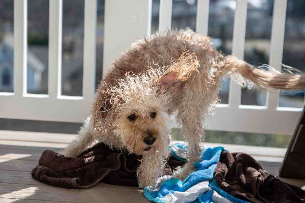 Can You Use A FURMinator on A Goldendoodle?