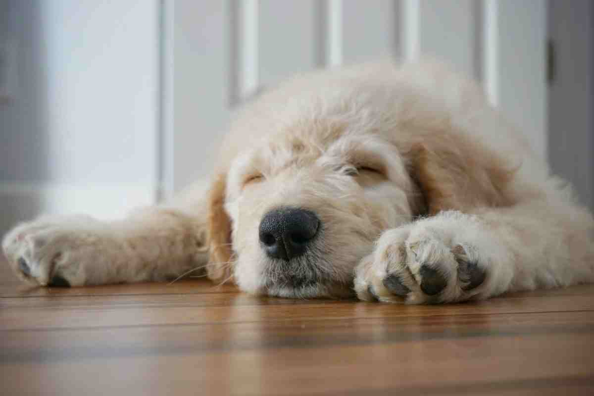 What Time Should Puppies Go To Bed?