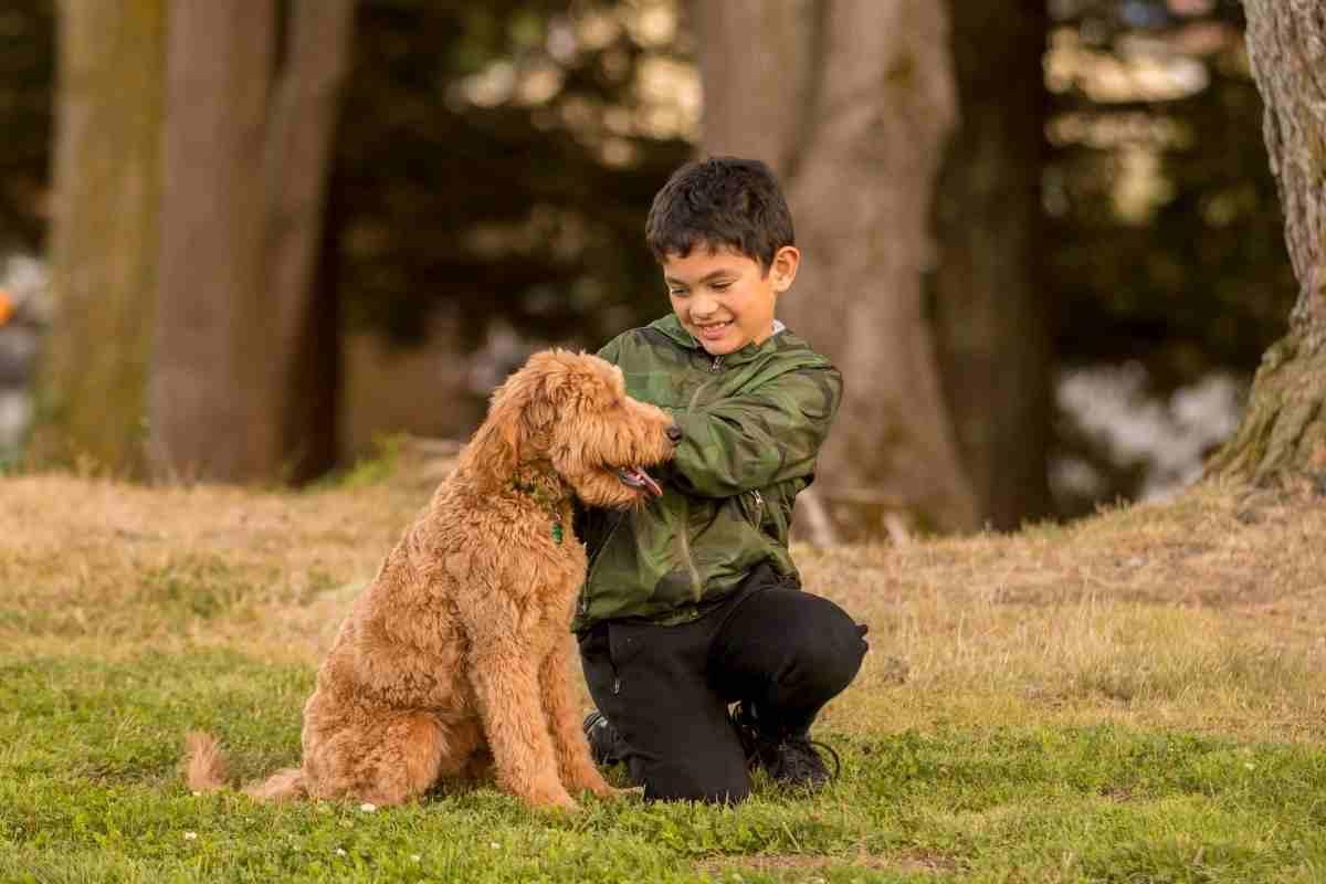 Are Goldendoodles Stubborn?