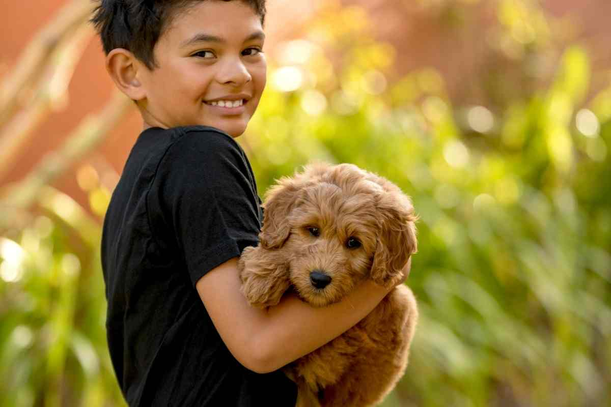 Do Goldendoodles Like To Be Held?