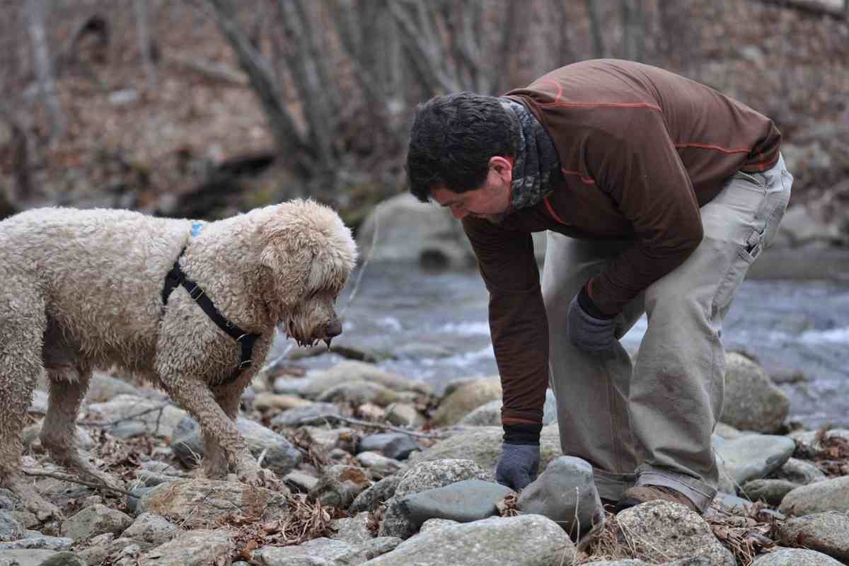 5 Fun Ways To Bond With Your Goldendoodle