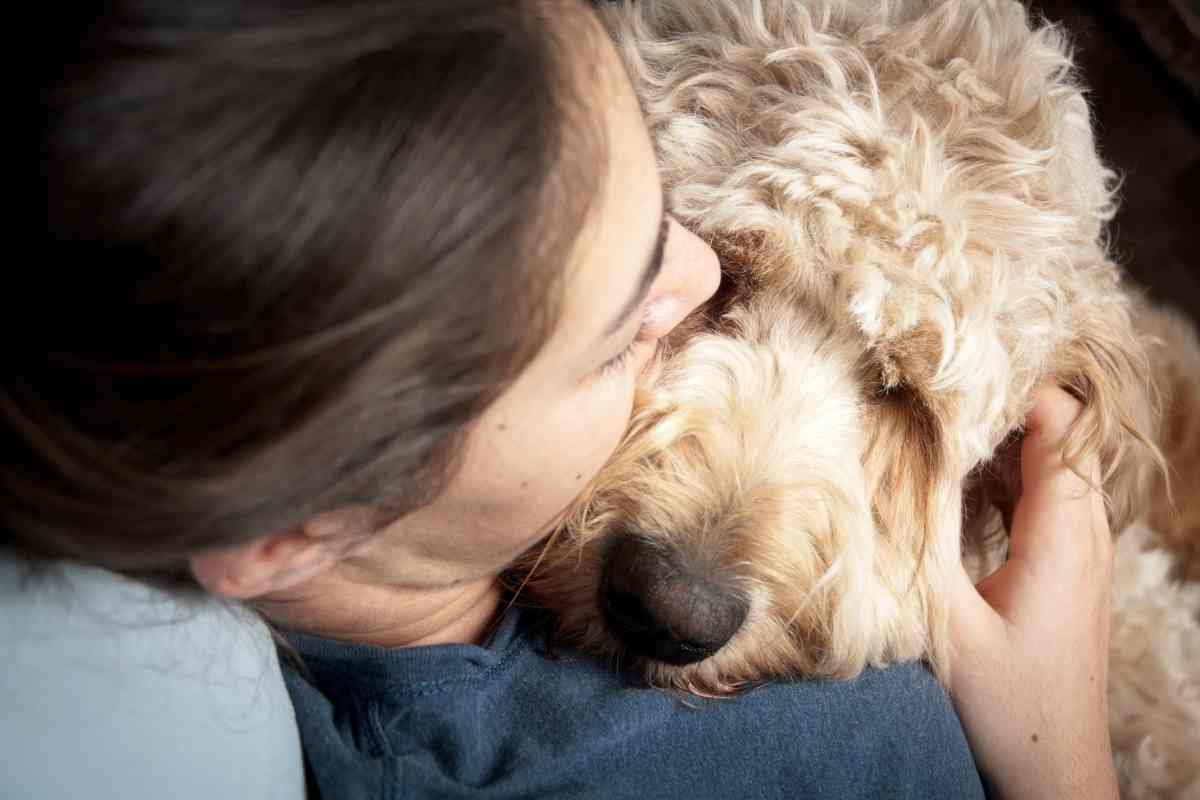 How Do Goldendoodles Show Affection?