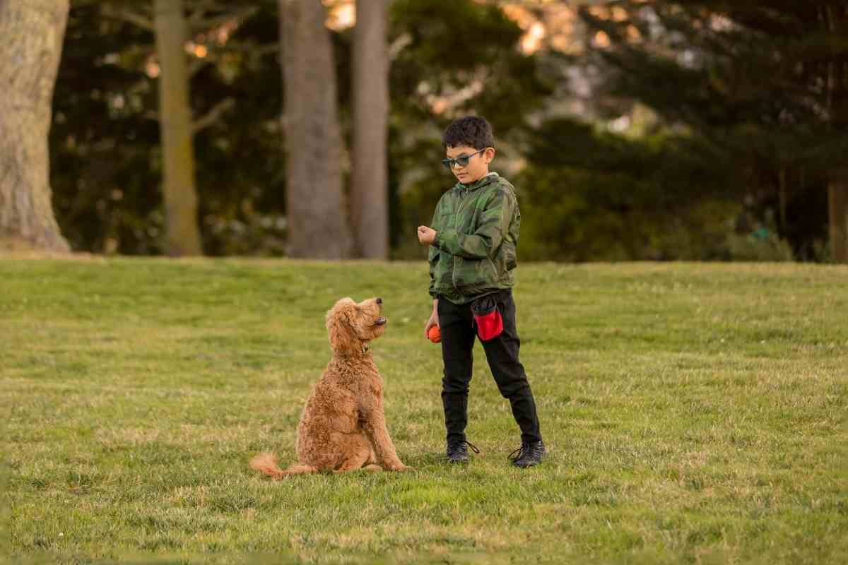 Can Goldendoodles Be Easily Trained?