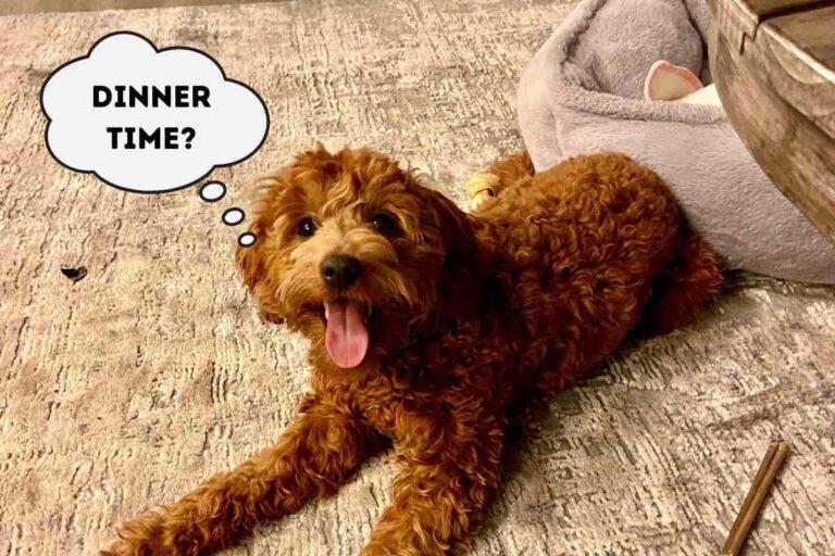 Nom Nom Dog Food Delivery