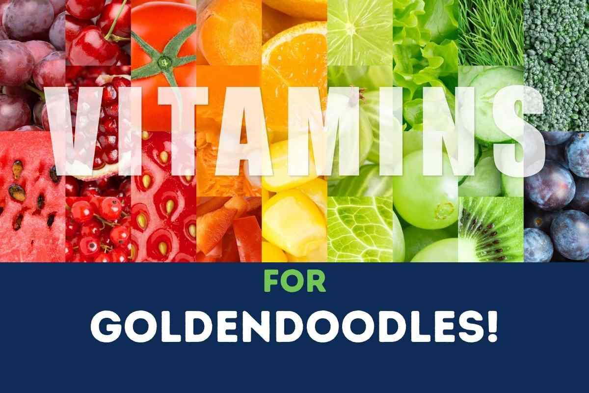 Vitamins For Goldendoodles