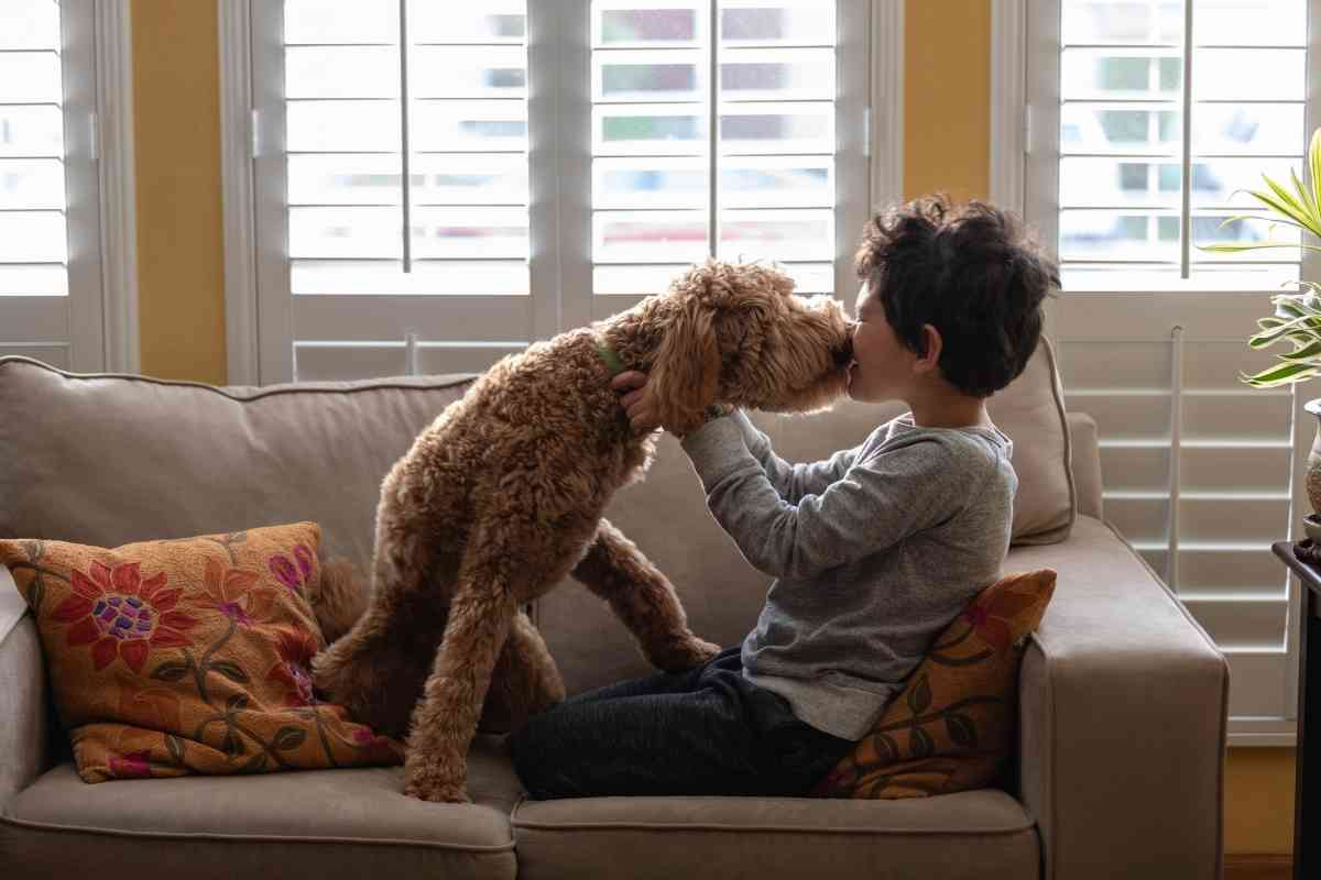 Why Are Mini Goldendoodles Good Dogs? (7 Reasons Why They're Great!)